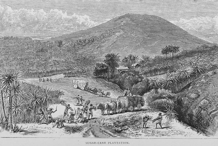 Marrat-plantation1