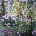 FloGris-Garden-Curtice-Taylor-WEB