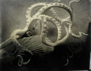 "Alida Fish, ""Shell Octopus (Cabinet of Curiosities),"" 2008"