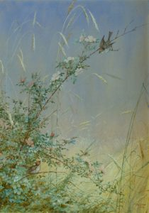 "Fidelia Bridges, ""Wild Roses Among Rye,"" 1874, watercolor and gouache over pencil on paper, 13 ½ x 9 in., Florence Griswold Museum"