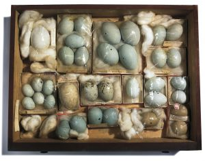 Willard Metcalf, Collection Chest, Wood containing a collection of butterflies, moths, birds' eggs, nests and supporting documents, 64 ½ x 42 ¼ x 14 ¼, Florence Griswold Museum