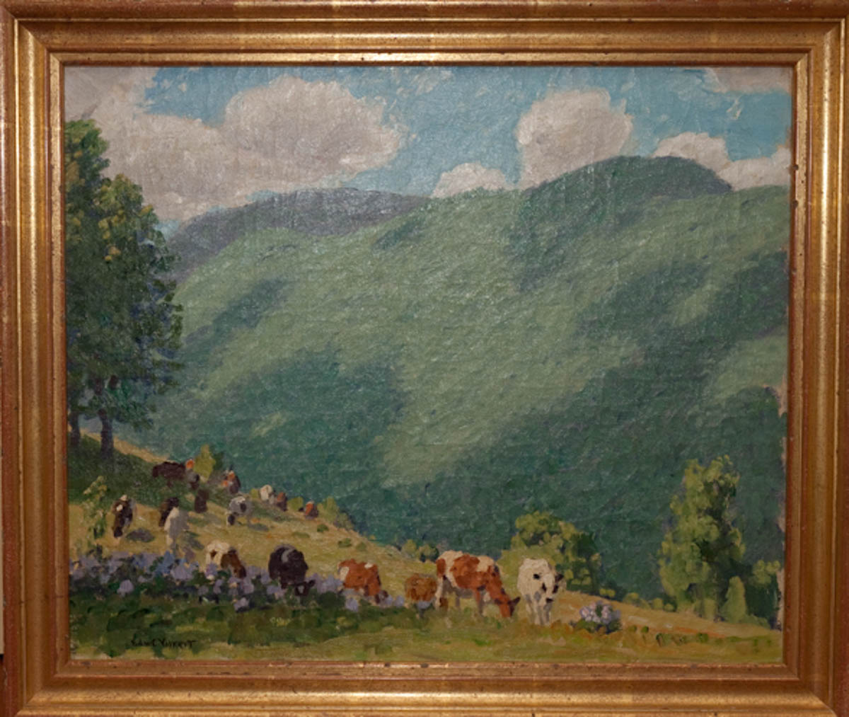 Untitled [Guernseys and Holsteins in field with green mountain in the background]