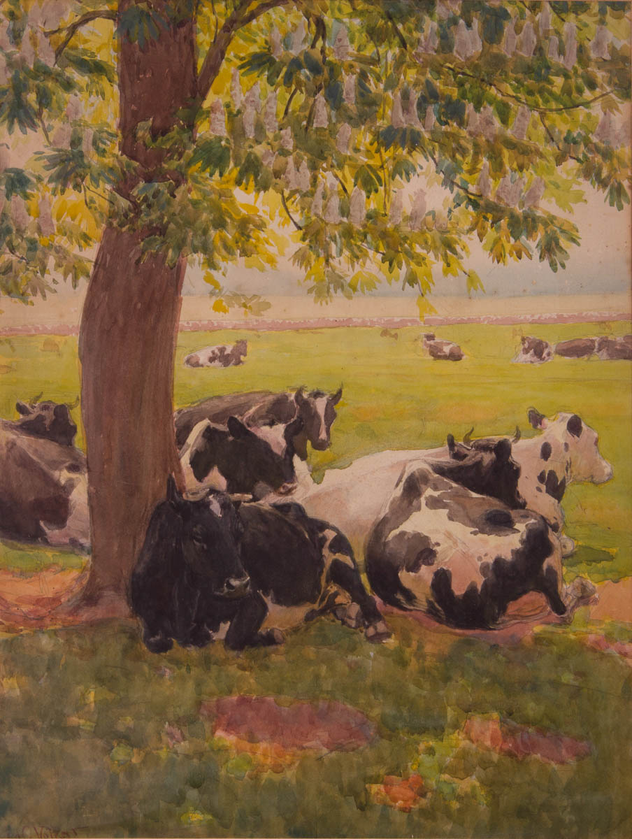Untitled [Black and white cows under flowering tree]