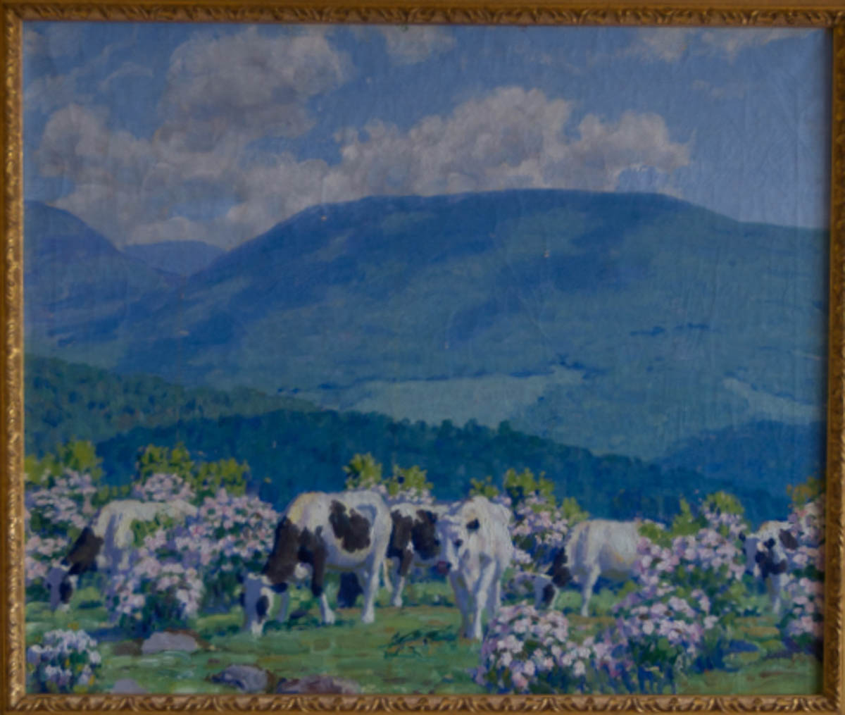 Untitled [Cows grazing amid mountain laurel in the Catskills]