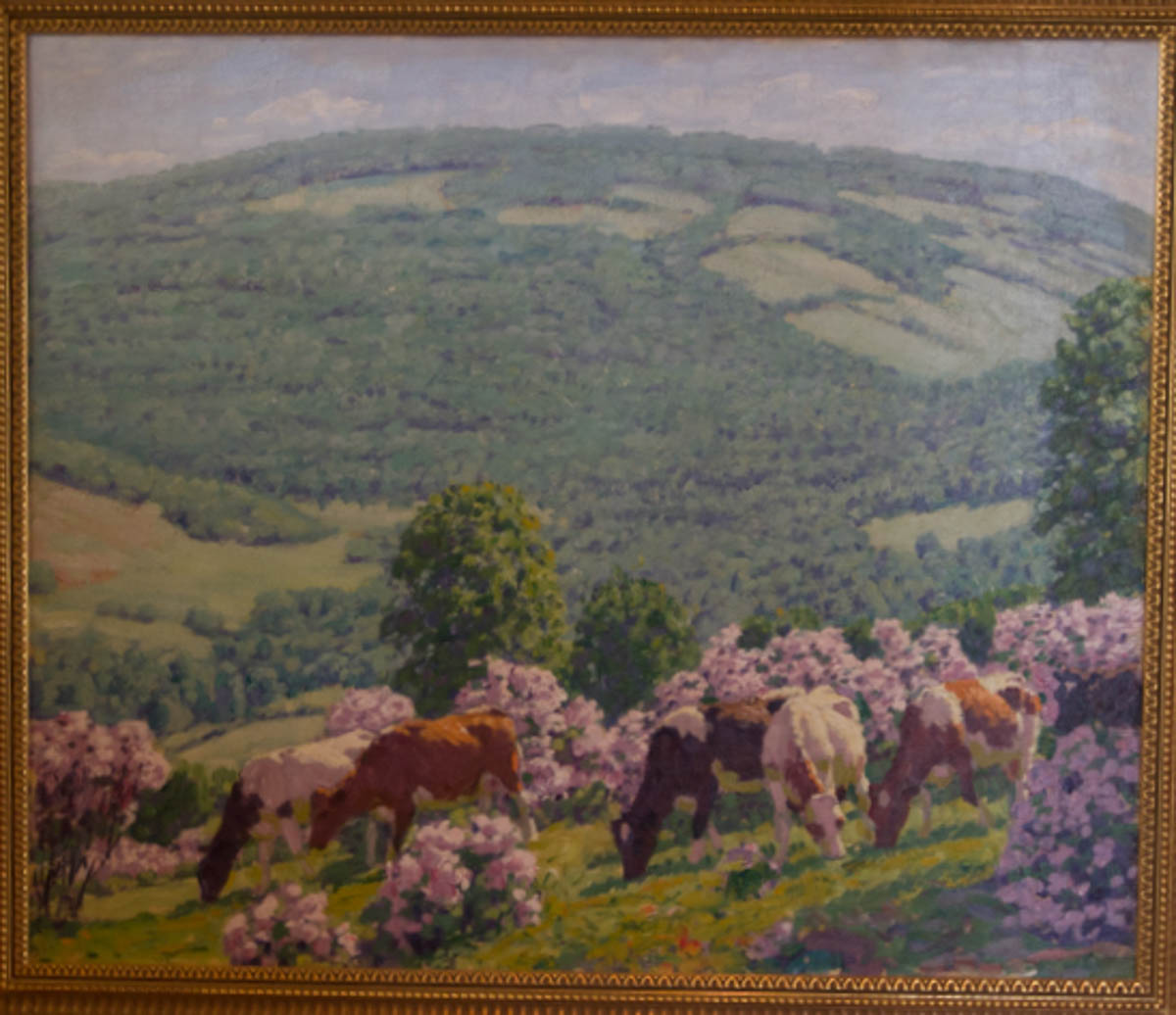 Untitled [Cows grazing amid mountain laurel in Catskills]