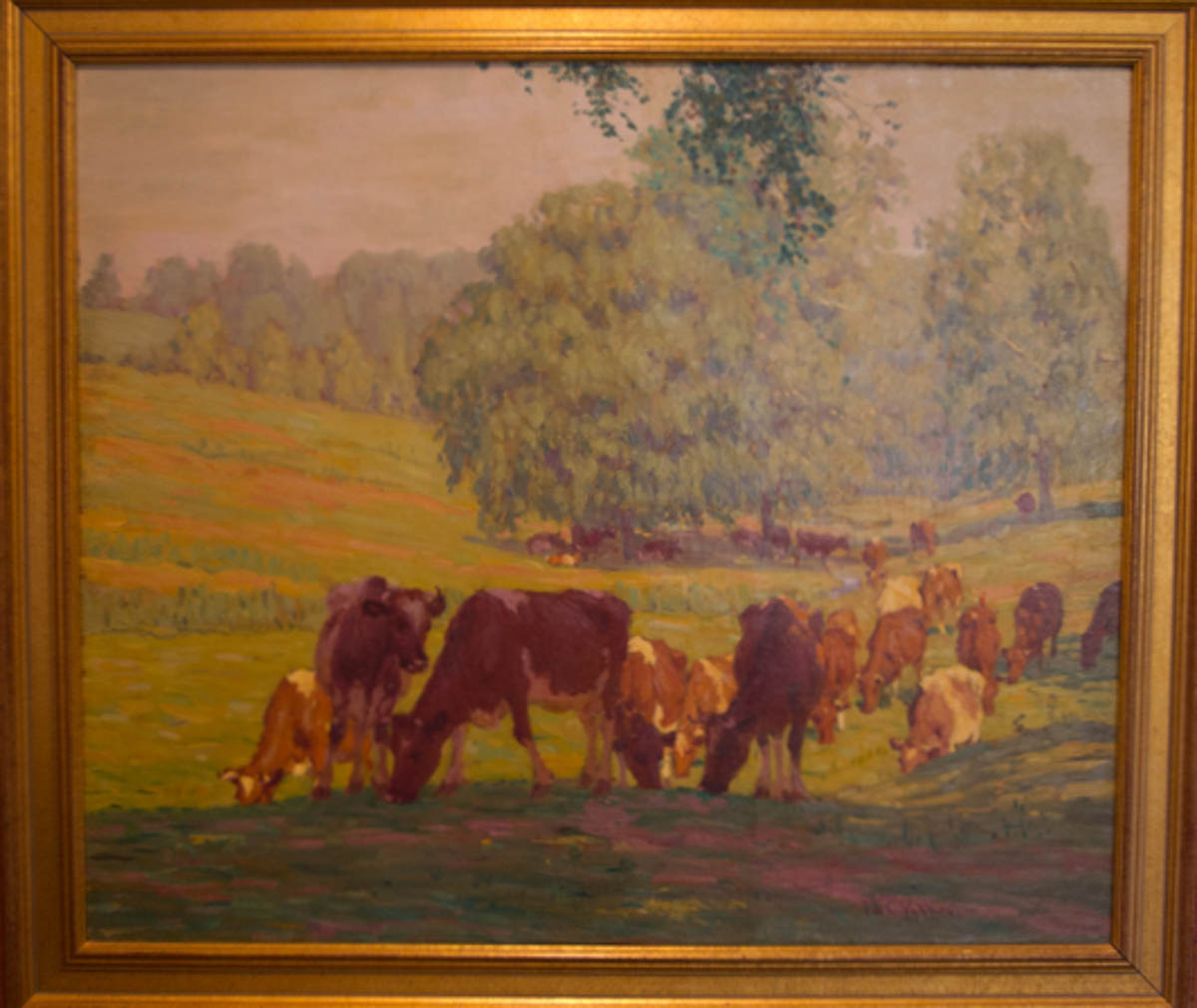 Untitled [Brown cows grazing at the edge of shadowed grass]